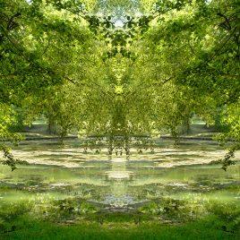 Baum-See-Gespräche
